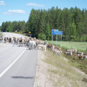Rendieren op de weg